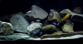 Malawi Aquarium Rückwand